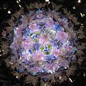 紫陽花 内部